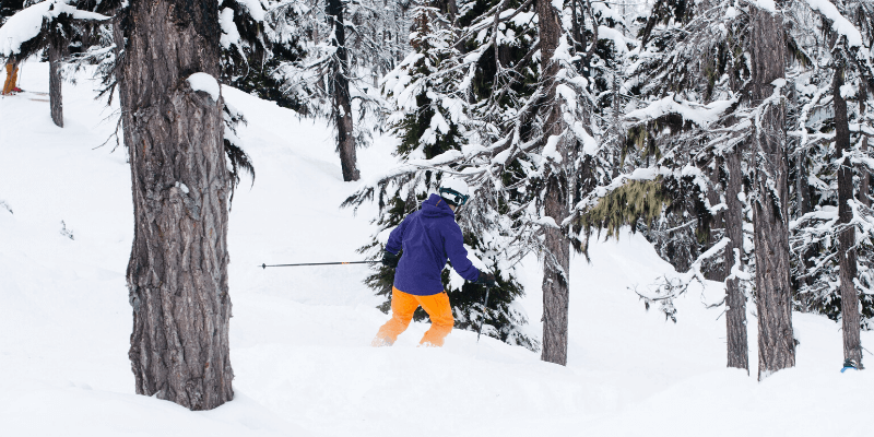 skis for tree